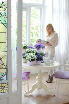Die Top 10 Der Grünpflanzen Fürs Zimmer | Pinterest | Zimmerpflanzen,  Investieren Und Jährlich