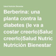 hierbas naturales berberina para la diabetes