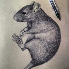 amazingly realistic ink drawing of rat