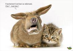 Cartes postales animalières
