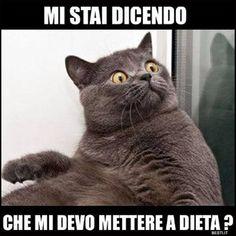#disagio