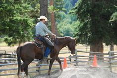 Starting the Young Horse~Jonathan Field shares his tips for solid foundation training.
