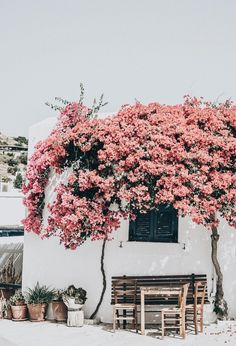 days of camille: trip in greece: les cyclades - paros Bougainvillea, Beaux Villages, Adventure Is Out There, Belle Photo, The Places Youll Go, Scenery, Outdoor Living, Around The Worlds, Paros Greece
