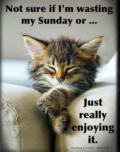 Sunday Meme, Sunday Morning Quotes, Happy Sunday Morning, Sunday Quotes Funny, Blessed Sunday, Weekend Quotes, Happy Weekend, Morning Messages, Sunday Funday