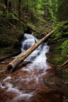 Unnamed Falls, Unnamed Tributary - Siouxon Creek, Gifford Pinchot National Forest, Amboy, Washington