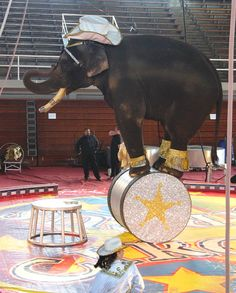 My favorite memory of the circus was buying peanuts to feed the elephants.  I don't think you can do this anymore, sad.  But then, it might have been injurious to them to eat so many peanuts.