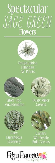 Sage green is one of Pinterest's Top Trends of 2018! Check out some of our Sage Green options. - FiftyFlowers.com