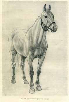 Записи блогов | Кочетова Татьяна | Как рисовать лошадь... Horse Drawings, Animal Drawings, Cool Drawings, Painted Horses, Art Scratchboard, Horse Drawing Tutorial, Horse Sketch, Horse Anatomy, Art Painting Gallery