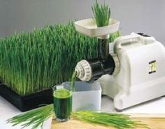 The health benefits of wheatgrass juice are many, as frequent drinkers will attest. They are listed simply here, along with delicious recipes for healthy juice blends with wheatgrass as the base ingredient. Juicer Recipes, Detox Recipes, Raw Food Recipes, Delicious Recipes, Detox Foods, Juicing For Health, Health And Nutrition, Juice Smoothie, Smoothies