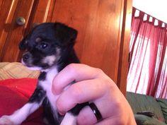 Baby little mutt