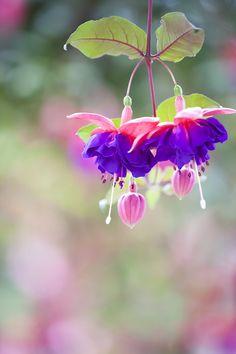 Angel earrings by Hideaki Yoshida