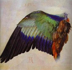 Albrecht Durer >> Wing of a Roller  |  (Oil, artwork, reproduction, copy, painting).