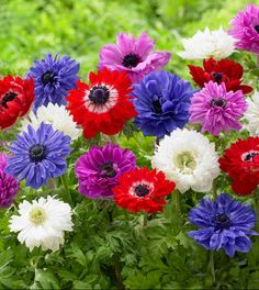 429 best pretty flowers images on pinterest in 2018 beautiful 100 different types of flowers and their names mightylinksfo