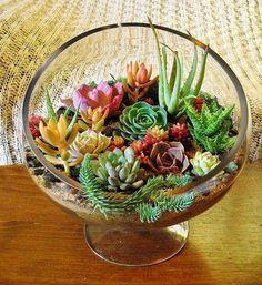 Deko mit Suculentas Small garden in a glass bowl - arrangements ideas with succulent plants Succulents In Glass, Succulent Bowls, Succulent Arrangements, Cacti And Succulents, Planting Succulents, Succulent Ideas, Floral Arrangements, Cactus Plants, Succulent Landscaping