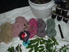 Elderberry Dyeing
