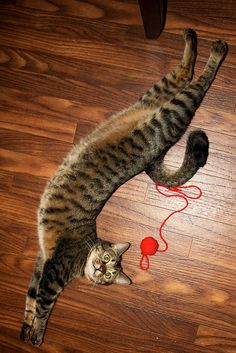 "* * "" I dares ya to tries ands getz de red ball stringy thingy."""
