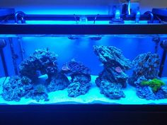Post your modern aquascape - Reef Central Online Community
