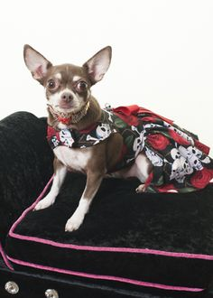This is one of my dresses I had made for me the necklace is Bultler & Wilson #celebdog #queeniewoofwoof