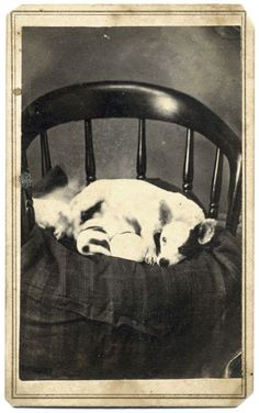 """https://flic.kr/p/9qZNm5 