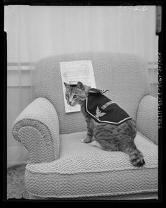 WAR VETERAN-Pooli, who rates three service ribbons and four battle stars, shows she can still get into her old uniform as she prepares to celebrate her birthday. The cat served aboard an attack transport during World War II. California Room, 15th Birthday, World War Ii, Ribbons, Transportation, Battle, United States, Throw Pillows, Collections