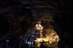 Te Anau Glow Worm Caves Tour
