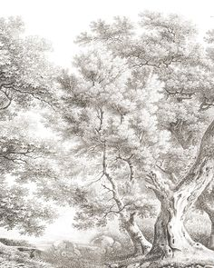 Mural Art, Wall Murals, Monochrome Painting, Exotic Homes, Zen Style, Stunning Wallpapers, Grisaille, Tree Wallpaper, Classic Interior