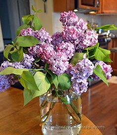Fresh cut lilacs! Smell out of this world!