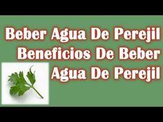 Aqui los beneficios de beber agua de perejil....Visita nuestro canal: https://www.youtube.com/user/LaHierbasMedicinales