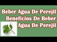 Beber Agua De Perejil - Beneficios De Beber Agua De Perejil - YouTube