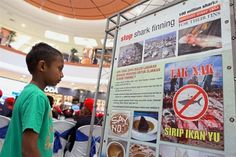 A child reading a poster at the Say No to Shark Fin Consumption exhibition in Aeon Manjung. — Photos: RONNIE CHIN/The Star