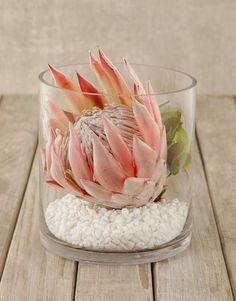 König Protea in der kurzen Zylinder-Vase King Protea in the short cylinder vase - - the Flor Protea, Protea Bouquet, Protea Flower, Flower Vases, Flower Pots, Protea Wedding, Wedding Table Flowers, Wedding Table Centerpieces, Vases