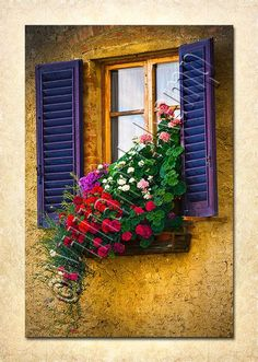 photo of flowers in a window in italy | Window Flower Box San Gimignano Italy by WilliamJKempPhoto, $90.00