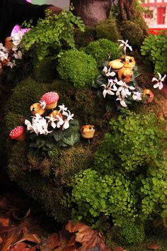Muffin toadstalls - part of the edible wonderland at Incredible Edibles for KPMG at Altitude 360 Lafayette Hotel, Grazing Tables, Incredible Edibles, Food Platters, Party Desserts, Wedding Catering, Edible Garden, Canapes, Soul Food