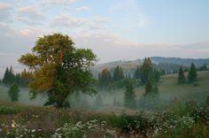 "theenergyofnature: ""  Morning meadow by Gennadiy """