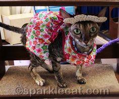 Coco is a true fashion model! CurlzandSwirlz.com