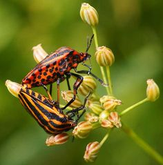 Insects are a class within the arthropods that have a chitinous exoskeleton, a three-part body , three pairs of jointed legs, compound eyes, and two antennae. They are among the most diverse group of animals on the planet and include more than a million described species and represent more than half of all known living organisms.