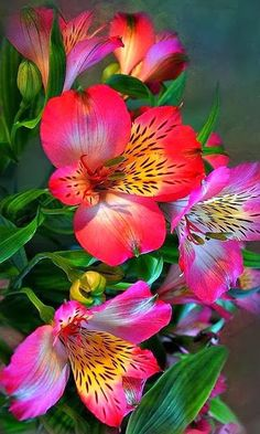 210 best flower names images on pinterest in 2018 wedding bouquets alstroemeria flowers in a vase unique flowers lilies flowers exotic flowers colorful mightylinksfo