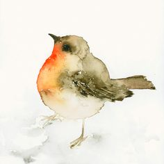 Bird Watercolor - Robin Redbreast. $88.00, via Etsy.