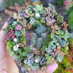 Wreath of little cuties. #succulove shared by @jenssuccs #succulents #lovelove