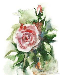 free watercolor painting templates | Watercolor -Rose- Royalty Free Stock Photos - Image: 19836198