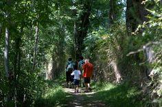 Randonnée dans une forêt de la vallée du Louron, via Flickr.