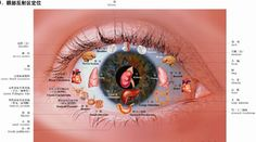 eye map TCM | Traditional Chinese medicine diagnosis: The significance of eye…