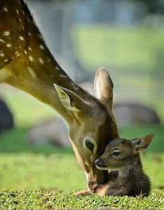 Deer with baby fawn 💗💕 Animal photography pictures