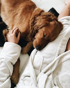 we take amazing pics like this one with cliff in our fancy lil robes and high quality cameras Cute Puppies, Cute Dogs, Dogs And Puppies, Doggies, Baby Animals, Cute Animals, Irish Setter, Retriever Puppy, Dog Photography