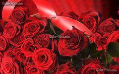Scaricare Gli Sfondi Roses Fiori Mazzo Di Fiori Regalo Sfondi