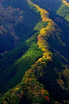 | ♕ |  Autumn valley in Nara, western Japan  via lifes-terms | kml posted: ナメゴ谷の紅葉 - photohito