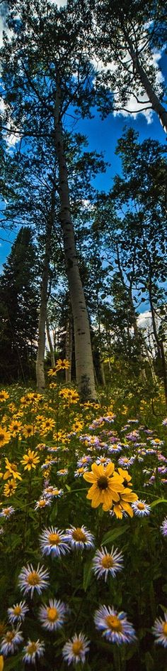 Trees & Flowers - Long, Tall, Vertical Pins.