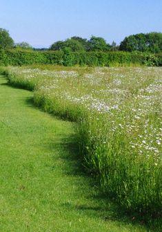 Wild Flower Meadow, Wild Flowers, Outdoor Plants, Outdoor Gardens, Landscape Design, Garden Design, Meadow Garden, Garden Architecture, Natural Garden