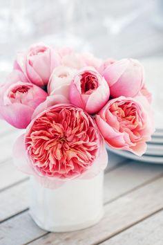Odds & Ends: Spring Flower Guide