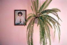Jessica Backhaus, Pink Beata 2004
